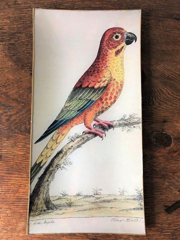Parakeet decoupage plate image