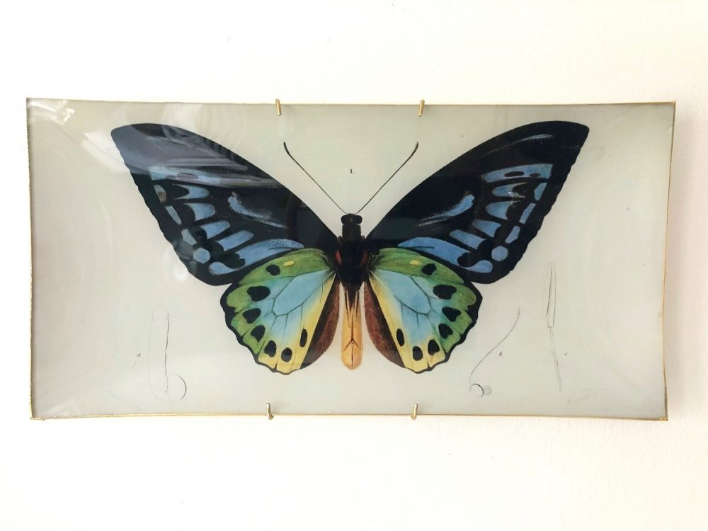 blue and green butterfly decoupage plate image