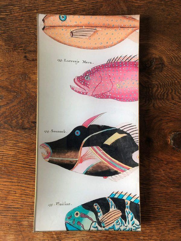colourful fish decoupate plate image