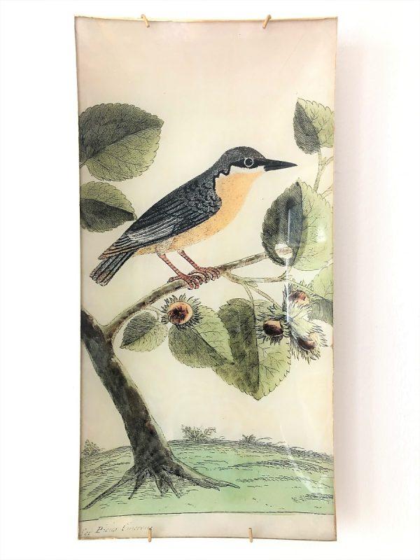nuthatch bird decoupage plate image