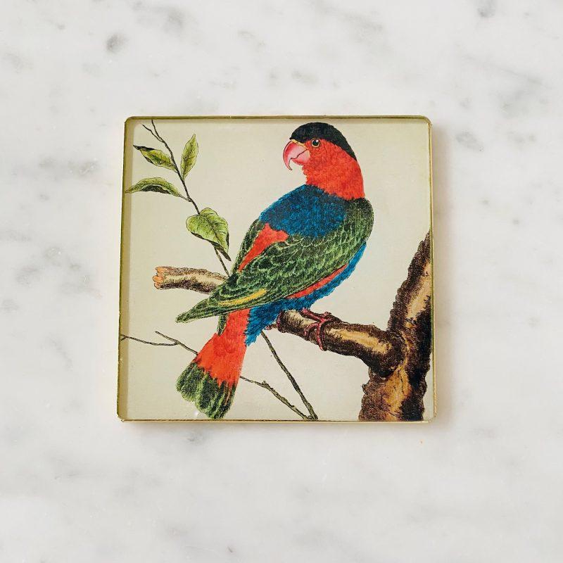 lory parrot decoupage coaster image
