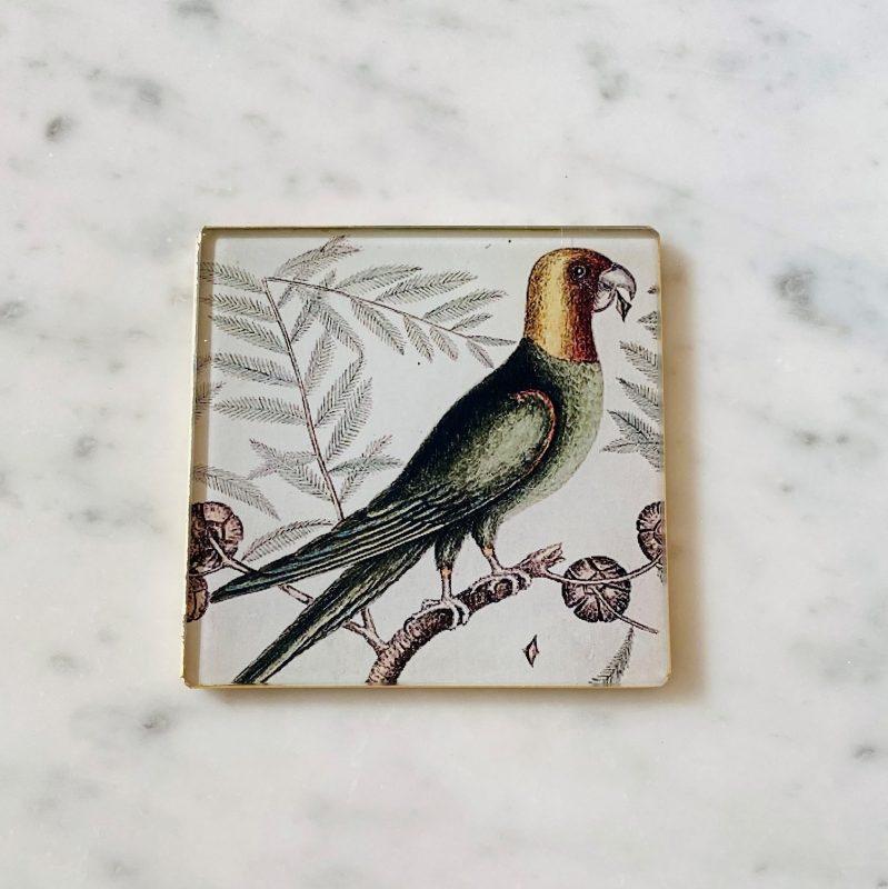 carolina parrot decoupage glass coaster image
