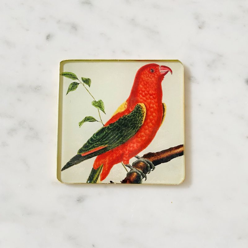 chattering parrot decoupage glass coaster image