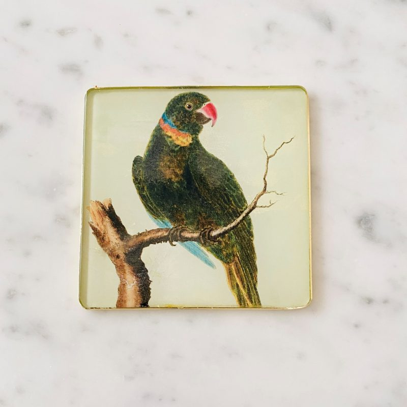 collared parrot decoupage glass coaster image