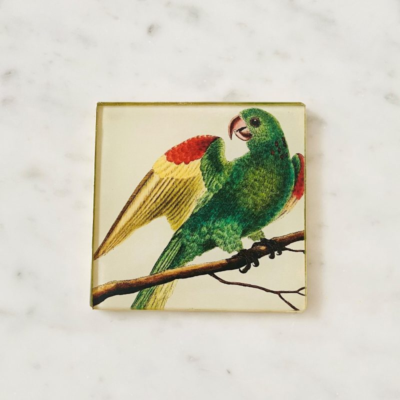 guyana parakeet decoupage glass coaster image